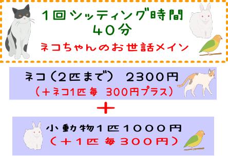 ワンニャンセット ネコちゃんのお世話メイン40分