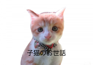 子猫のお世話